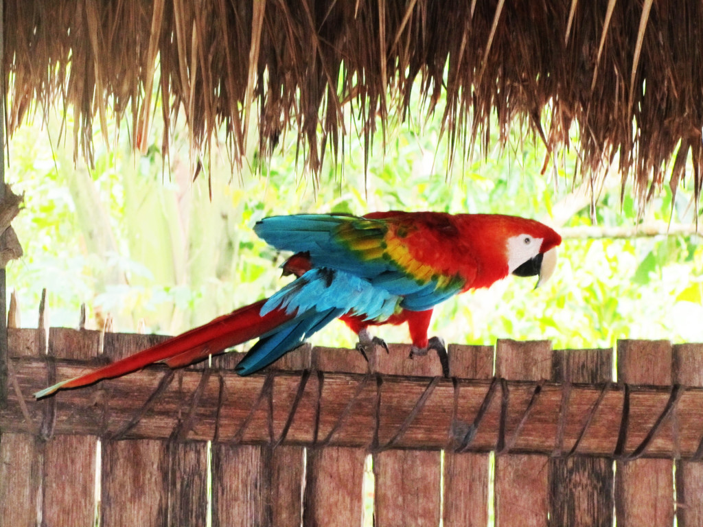 a-parrot-in-ecuadorian-jungle