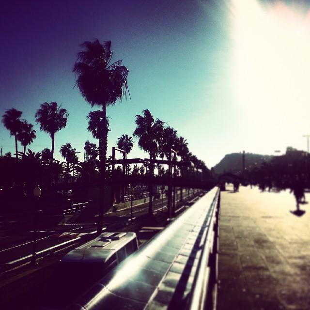 barcelona palm trees by runaway jane